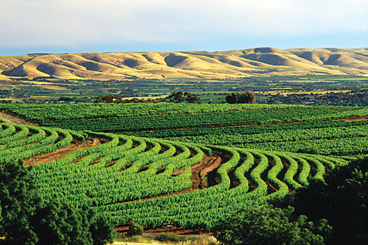 McLaren Vale vineyards in South Australia