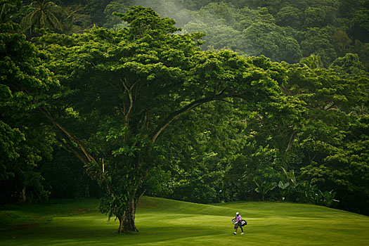 A  golfer is dwarfed by the majestic flora, here at the 16th