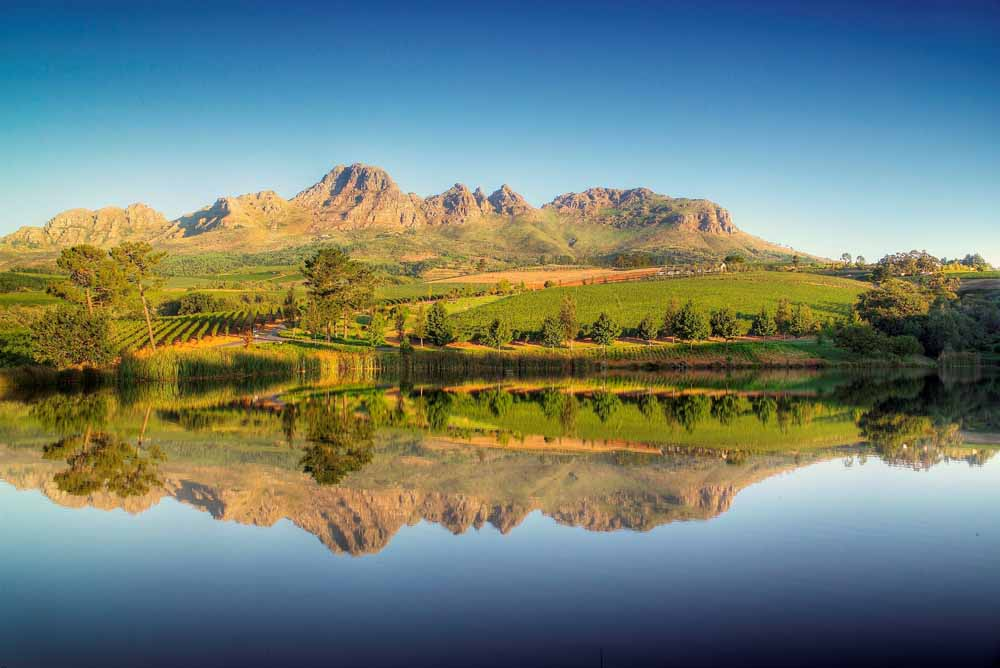 Els' vines nestle on the sun-baked slopes of Helderberg Mountain