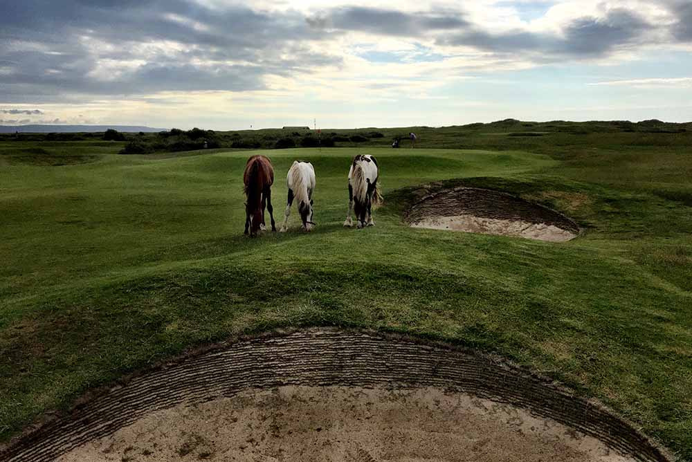 The Horses: Immovable Obstructions at RND
