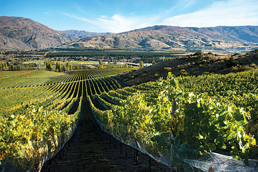 Akarua is one of Central Otago's most reputable producers